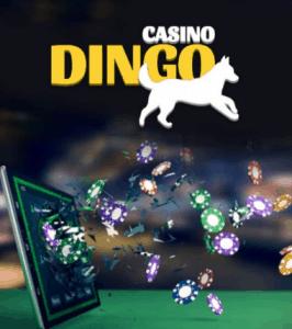 New online casinos - Dingo